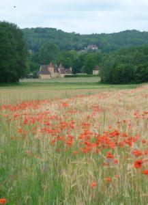 Poppy fields along the way