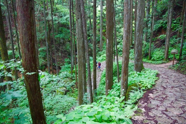 """Forest bathing"" on the Nakasendo"