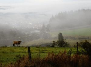lesley-mist