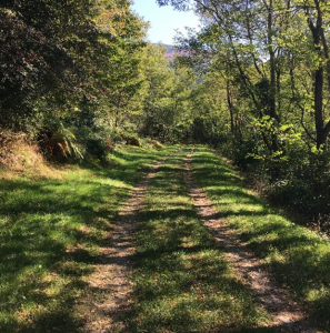 lesley-trail
